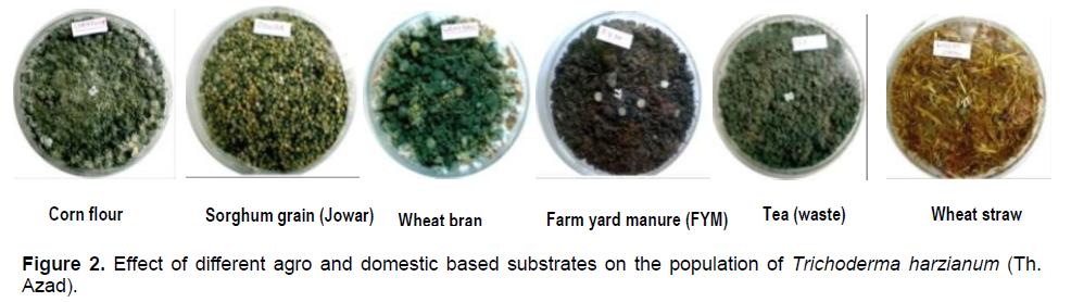 Trichoderma biofungicide a biological product of useful soil fungi 5 upX15gr