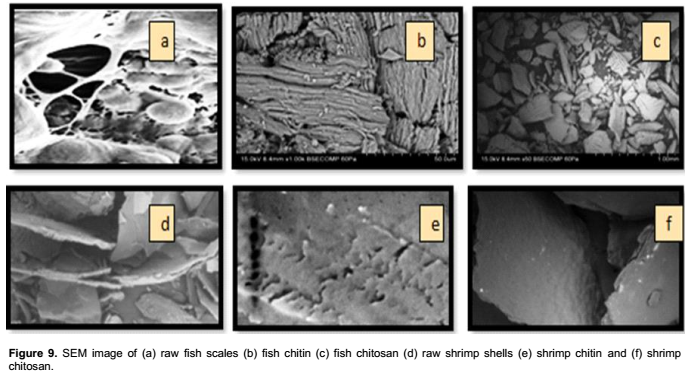 African Journal of Biotechnology - chitosan from shrimp