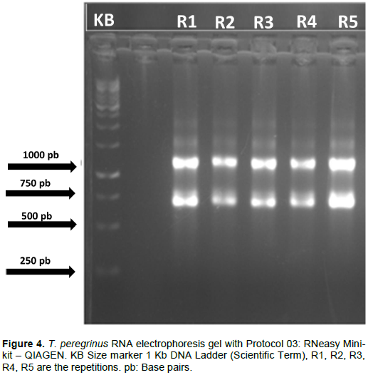 African Journal Of Biotechnology Evaluation Of Different Methods For Total Rna Extraction From Thaumastocoris Peregrinus