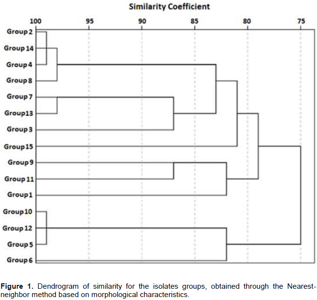 African journal of microbiology research rhizobia isolation and moreover the other 21 isolates were observed with greater than or equal to 3 mm colonies within three to four days of growth which were classified as fandeluxe Image collections
