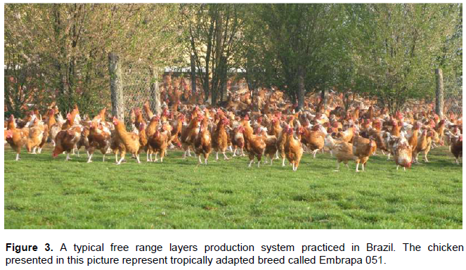 International Journal of Livestock Production - ethiopian native