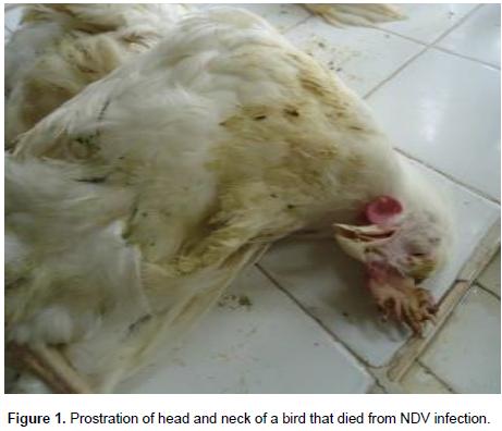 Journal of Veterinary Medicine and Animal Health